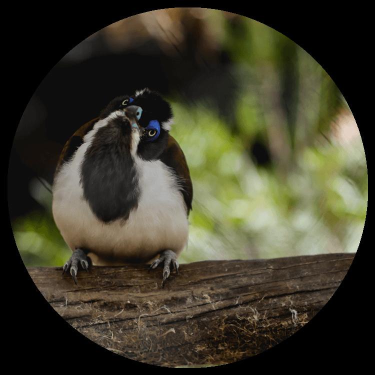 A small bird tilts its head