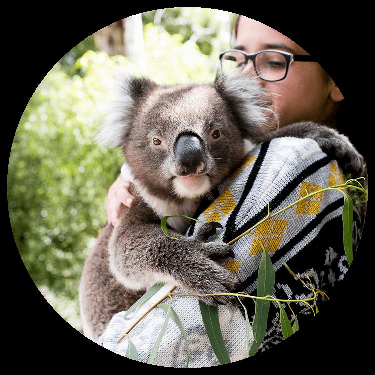 A young girl holding a koala
