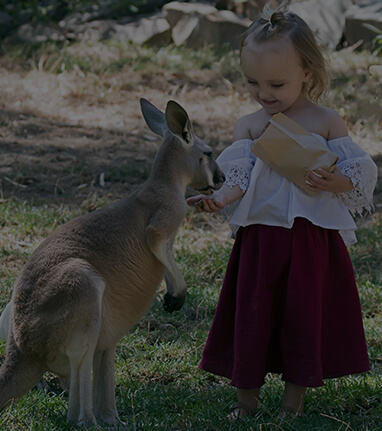 Gorge-Wildlife-Park-Adelaide-Hills-Zoo-South-Australia-Feeding-Kangaroo