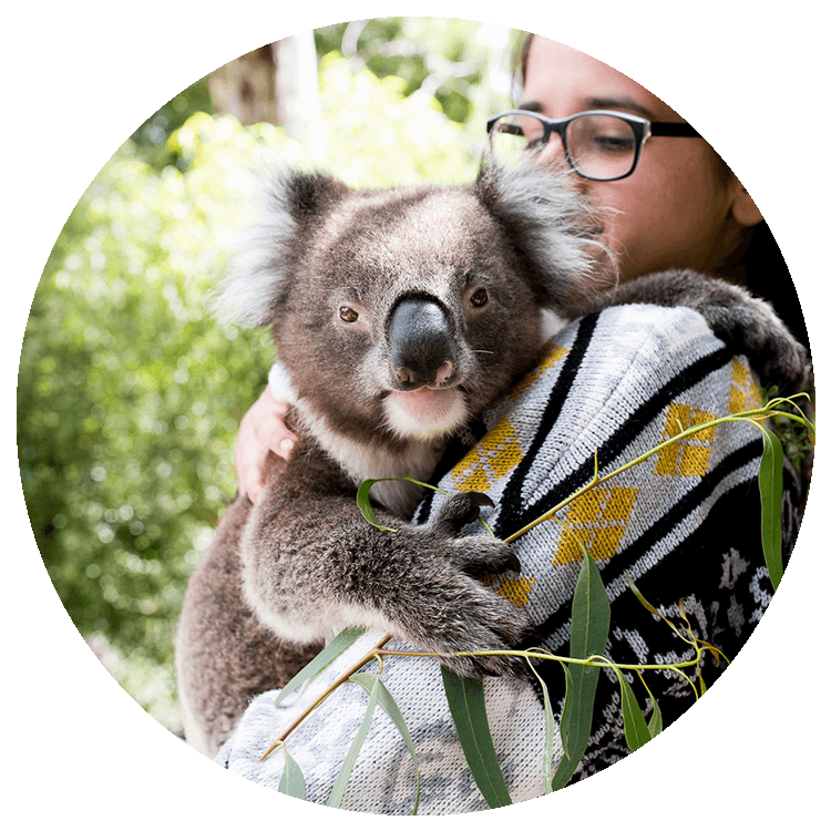 A young girl holds a koala