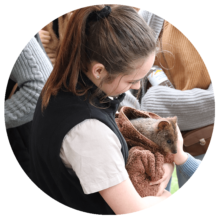 A girl holds a wallaby