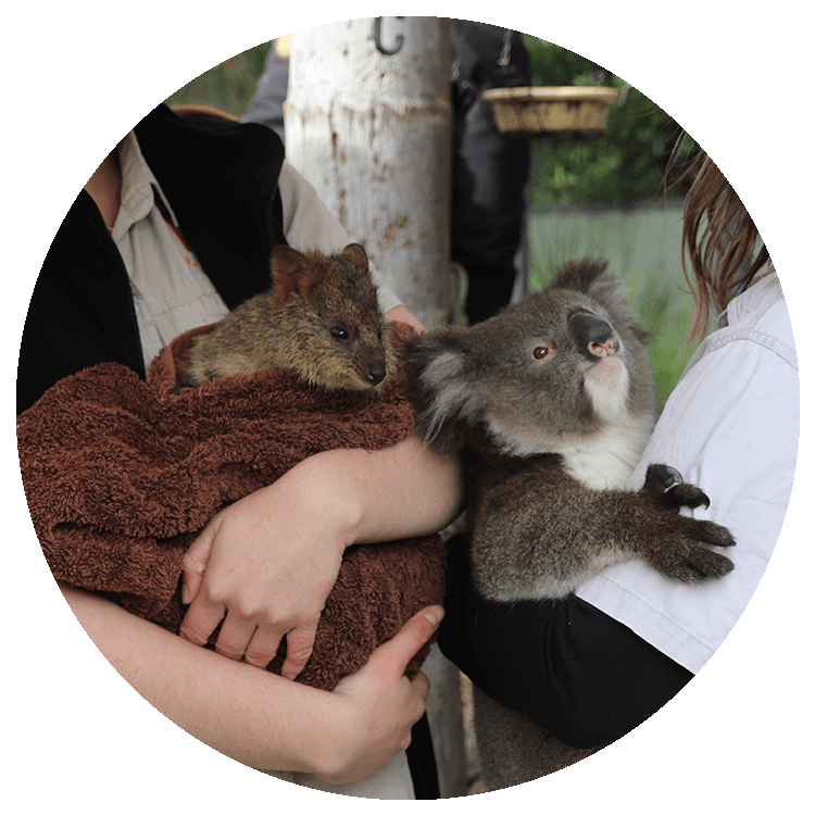 A wallaby and koala are held by two young woman